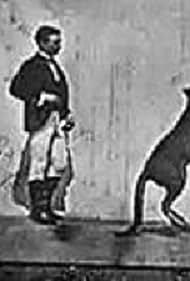 The Boxing Kangaroo (1896)