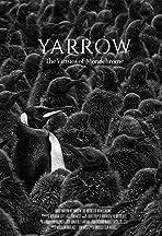 Yarrow: The Virtues of Monochrome