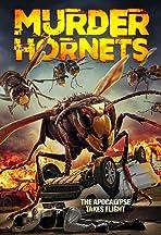 Angry Asian Murder Hornets