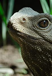 How Did The Tuatara Outlive Dinosaurs Poster