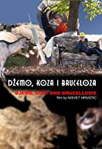 Djemo, Goat and Brucellosis
