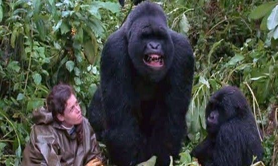 Sigourney Weaver in Gorillas in the Mist The Story of Dian Fossey 1988
