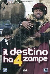 Primary photo for Il destino ha 4 zampe