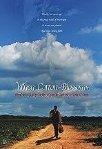 When Cotton Blossoms