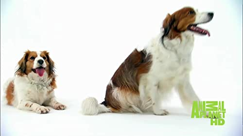 Dogs 101: Big Dogs And Small Dogs