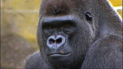 Animal Atlas: Animals And Us/Animal Passport/Animal Mysteries