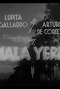 Primary photo for Mala yerba