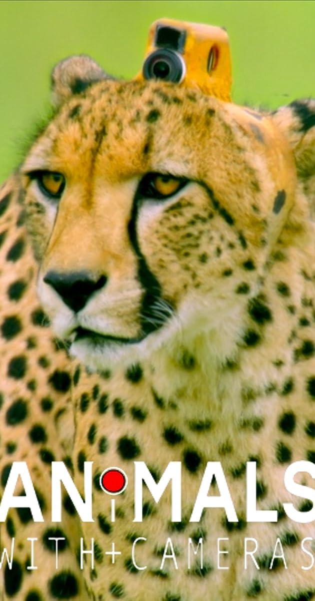 descarga gratis la Temporada 1 de Animals with Cameras o transmite Capitulo episodios completos en HD 720p 1080p con torrent