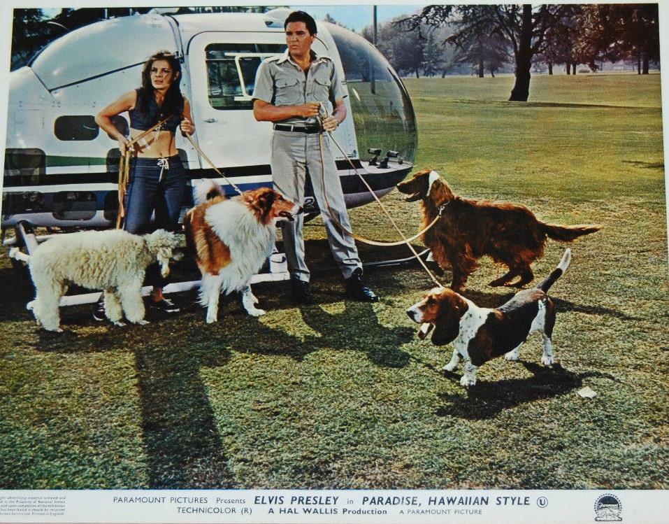 Paradise, Hawaiian Style (1966) - Photo Gallery - IMDb
