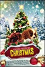 Project: Puppies for Christmas (2019)