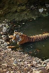 Primary photo for Planet Safari - Les tigres de la jungle