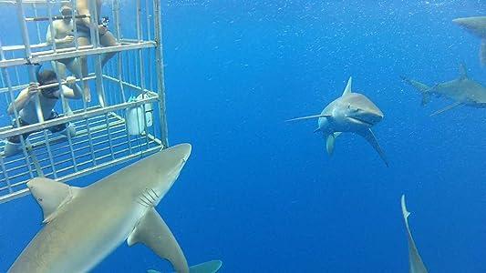Movies database free download Jono\'s Shark Adventure [1920x1200