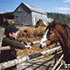 Alex Wrathell in Pit Pony (1999)