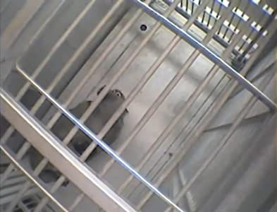 HD movie trailers download Columbia University Primate Experiments 2003 by none [480i]