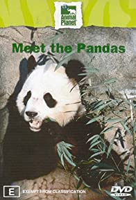 Primary photo for Meet the Pandas