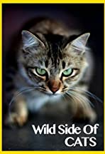 Wild Side of Cats