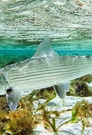 Big Bad Bonefish - West Indies Poster