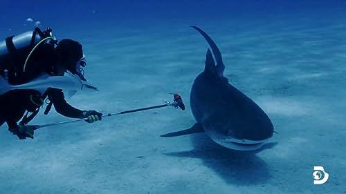 Shark Week: Shark Trip: Eat Prey Chum