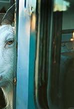 Goat Walker