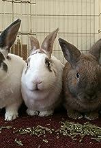 Sandy's Funny Bunnies