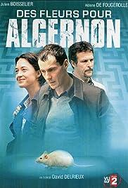 Des fleurs pour Algernon Poster