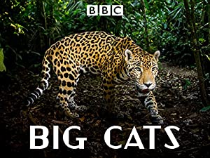 Big Cats (2018) Season 1 S01 (1080p BluRay x265 HEVC 10bit AAC 2 0 RCVR)