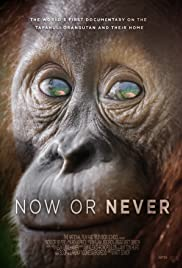 Now Or Never Poster