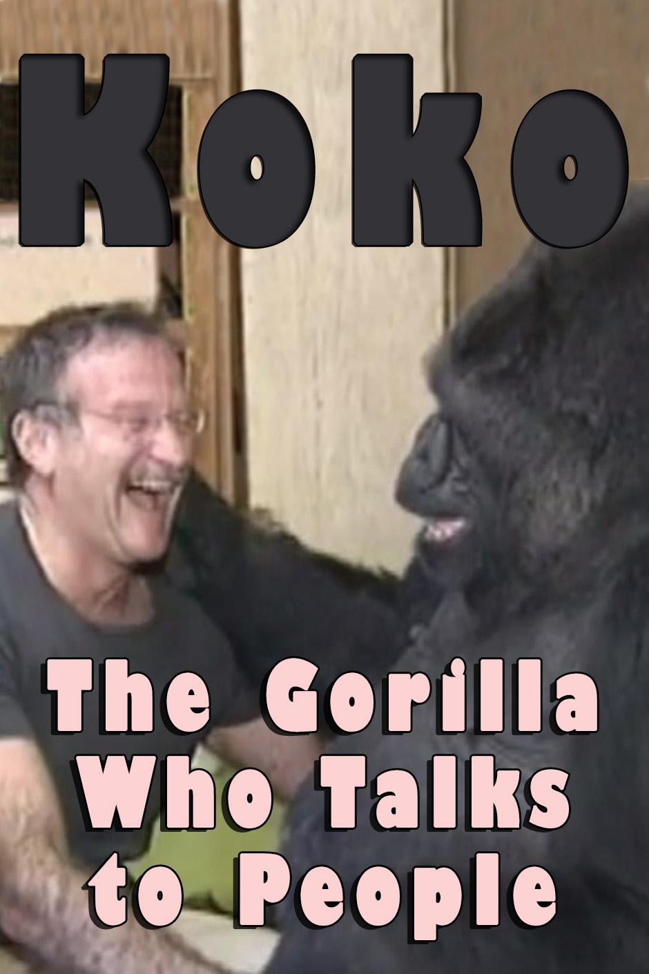 gorilla xxx video