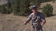 Bowhunting Montana Elk
