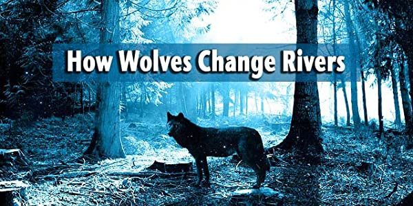 Movie trailers divx download How Wolves Change Rivers by none [1920x1080]