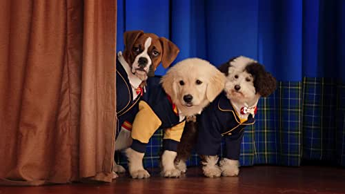 From the creators of Air Bud & Air Buddies, welcome to PUP ACADEMY, a secret place where pups magically go to become man's best friend.   Hidden from the human world, except for the school's human caretake Charlie (Don Lake) and his grandson Morgan (Christian Convery), pups from all over the globe travel to PUP ACADEMY through magical portals disguised as fire hydrants, to be trained by an esteemed canine faculty under the supervision of the wise Dean of Graduates (D.O.G.).  Now as three unlikely pups, SPARK, CORAZON and WHIZ begin their first year as new students and build a special bond of friendship, they discover that the academy is threatened by mysterious forces that threaten not only the academy but the very friendship between dogs and humans everywhere.  PUP ACADEMY features 22 half-hour episodes filled with fun and adventure, and a howling good time for the whole family.