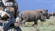 Friendly Fire/The Rhino Crisis