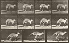 Kangaroo Walking on All Fours, Changing to Jumping (1887)