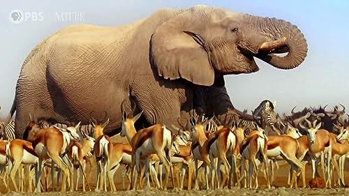Nature: Nature's Biggest Beasts