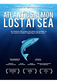 Atlantic Salmon: Lost at Sea
