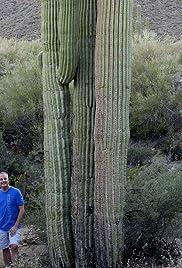 Cactus & C10s Poster