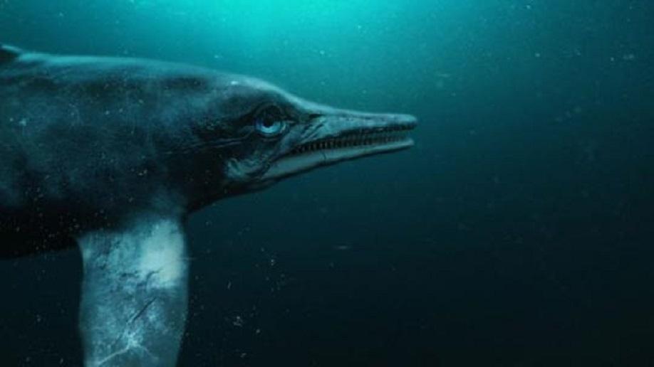Attenborough And The Sea Dragon 2018