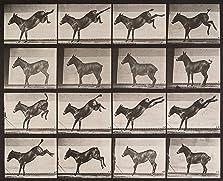 Mule Kicking (1887)