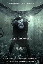 The Bowel