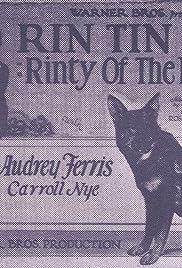 Rinty of the Desert Poster