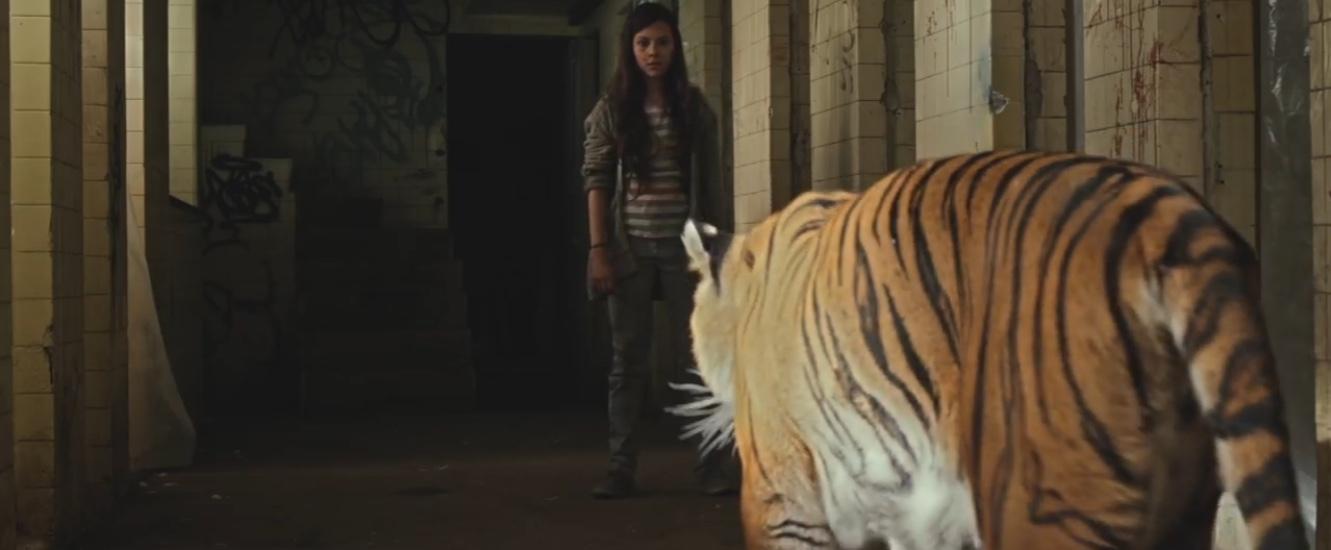 Tigers Are Not Afraid 2017 ile ilgili görsel sonucu