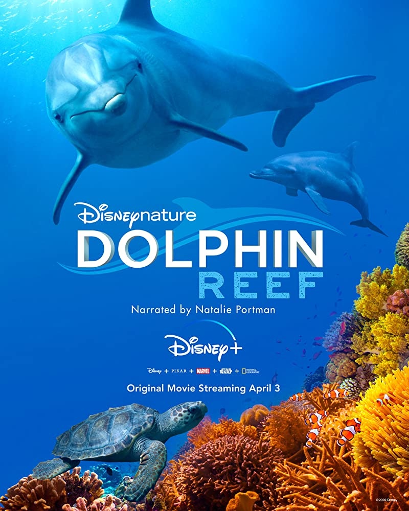 Dolphin Reef download