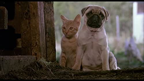 The adventures of a young cat and a dog as they find themselves accidentally separated and each swept into a hazardous trek.
