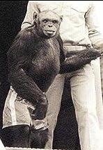 Humanzee: The Human Chimp