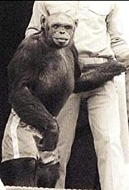 Humanzee: The Human Chimp Poster