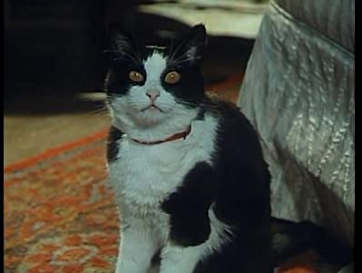Movies series to watch The Cat Brought It In [640x320]