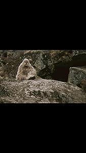 Yeti, le cri de l'homme des neiges France