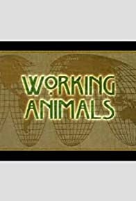 Primary photo for Working Animals
