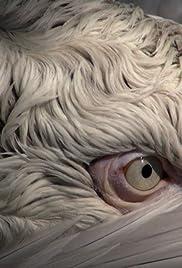 Birds (2014) - IMDb