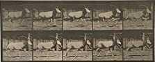 Oryx Galloping (1887)